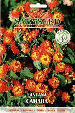 10 Semi/Seeds LANTANA CAMARA