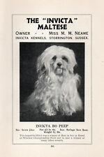 "MALTESE OLD VINTAGE 1934 NAMED DOG PRINT PAGE ""INVICTA BO PEEP """