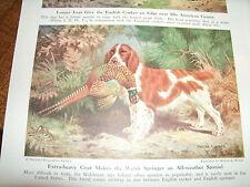 Vintage Walter A Weber Welsh Springer Spaniel bookplate 1947 National Geographic