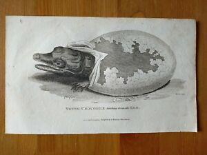 1802 General Zoology George Shaw Amphibia