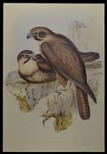 "John Gould Brown Falcon Bird Limited Edition Print 21"" x 14.5"""