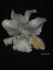 +# A005746_03 Goebel Archiv Muster Schaubach Orchidee Orchid Schau36 weiß
