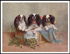 KING CHARLES ENGLISH TOY SPANIEL THREE DOGS IN A BASKET LOVELY DOG PRINT POSTER