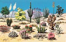 Postcard Cacti and Desert Flora Southwest