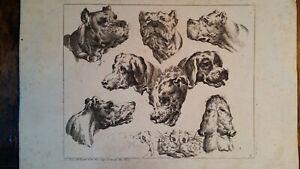 1728 ANTIQUE COPPER ENGRAVING STUDIES HEADS OF DOGS - JOHANN ELIAS RIDINGER
