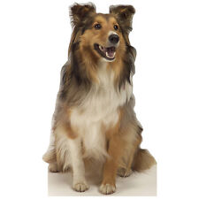 COLLIE Dog CARDBOARD CUTOUT Standee Standup Poster Prop Animal Canine FREE SHIP