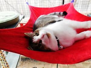 LUXURICAT HAMMOCK, RED VELVET, REVERSIBLE, CAT BED, CAT LOUNGER