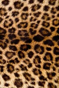 2019 Daily Planner Leopard Print Faux Texture 384 Pages: (Notebook, Diary, Blank