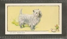 1934 Uk Dog Art Full Body Study Portrait Gallaher Cigarette Card Cairn Terrier