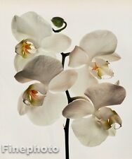 1980 Vintage 16x20 FLOWER Botanical Art ORCHID Photo Litho Plate By IRVING PENN