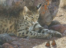 Carl Brenders OFF LIMITS-BOBCAT, art print, Monarch Butterflies
