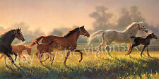A BRAND NEW HOPE Nancy Glazier CANVAS Signed & Numbered w/coa Horse Art