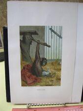 Vintage Print,CHIMP2,Prang,Animate Creation,1855,Chromo