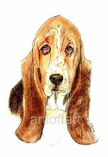 BASSET HOUND #3  Dog   ACEO Card Print by A Borcuk