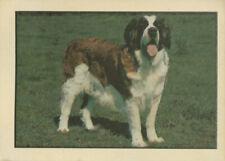 dog: St. Bernard (Saint Bernard), Kellogg's Dogs of the World trading card 1976
