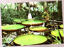 Unused Postcard, Royal Botanic Gardens, Kew, Victoria Amazonica water Lily