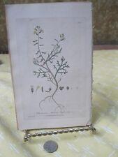 Vintage Print,ANNUAL CRESS ROCKET,British Flowering Plants,W.Baxter,1840