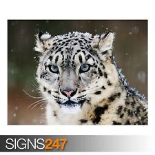 SNOW LEOPARD (3769) Animal Poster - Picture Poster Print Art A0 A1 A2 A3 A4