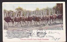 Cawston Ostrich Farm, South Pasadena, Cal. - 1906