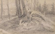 J.HASSELHORST(*1825), Alter Baum mit freiem Wurzelwerk, Bleistiftzeichnung