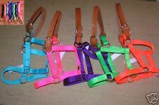 Mini Miniature Horse Breakaway Halter~Matching Lead or Cotton Coordinating lead