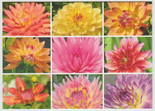 """Dahlias, Blank Greeting Card, Pastels, 5x7"""" With Envelope"""