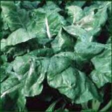 Spinach Seed, America, Heirloom,Organic, Non Gmo, 100 Seeds, Spinach Seeds