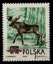 Elch. 1W. Gest. Polen 1954