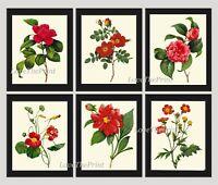 Unframed Botanical Print Set of 6 Antique Yellow Flowers Garden Floral Wall Art