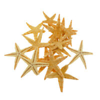 20pcs Small Natural Starfish Sea Star Ornament Flat Crafts 3cm-5cm Wholesales