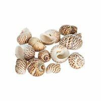 """Hermit Crab Shell   12 Natica Tigrina Shells 1/2""""- 1.5"""""""