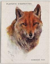 Common Fox Canis vulpes 1930sTrade Advertising Card
