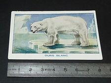 CHROMO SIROP DE DESCHIENS 1930-1939 BON POINT ECOLE OURS BLANC POLAIRE