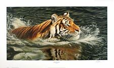 "Neil allen ""river crossing"" tiger natation sgd ltd ed! taille: 42cm x 70cm neuf rare"