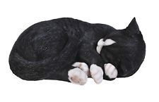 Vivid Arts - REAL LIFE CATS - Black & White Cat Sleeping