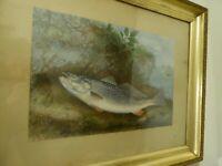 Antique original chromolithograph fish print S.A. Kilbourne 1874 gold frame