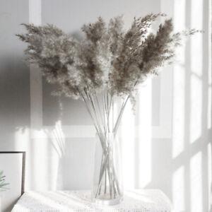 10x Natural Dried Pampas Grass Reed Flower Bunch Home Wedding Bouquet Decor VI