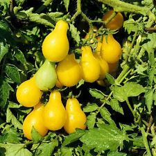 New listing Cherry Tomato Yellow Pear, 50 seed non-gmo