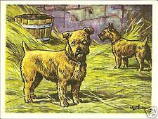1952 Dog Art Print Card Austria Tobacco Company Bildwerk Norfolk Norwich Terrier