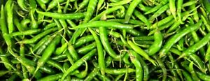 HOT CHILLI Seeds Skinny Indian Chillies : 20 seeds