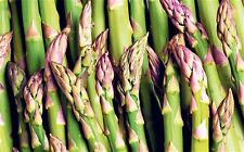 Asparagus Seeds - Uc-157 F2 Hybrid - Juicy Spears - Gmo Free - 40 Seeds