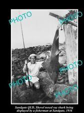 OLD LARGE HISTORIC FISHING PHOTO OF SANDGATE QLD, SHOVEL NOSE SHARK CATCH 1936