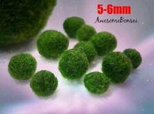 6 Marimo Moss Balls Cladophora live aquarium plant fish tank shrimp nano Usa