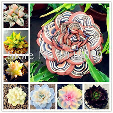 100 African Garden Seeds Plants Cactus Succulent Tree Purify Air Rare Mixed