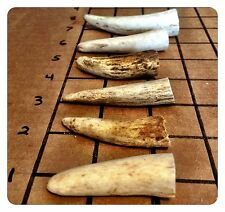 "2 Pounds Of 2""-3"" Deer & Elk Antler Tips! Perfect For Jewelry And Crafts!"