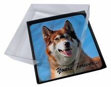4x Red Husky 'Yours Forever' Picture Table Coasters Set in Gift Box, AD-H68yC