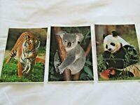 3 WILDLIFE POSTCARDS, LARGE 5 X 7, UNUSED - TIGER KOALA PANDA, FULL COLOR PHOTOS