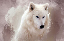 Large Framed Print - Beautiful White Haired Blue Eyed Wolf (Picture Animal Art)