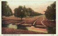 Irrigating A California Orange Grove Orchard CA 1920's Vintage Postcard