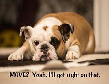 METAL REFRIGERATOR MAGNET English Bulldog Move Yeah Get Right On That Dog Humor